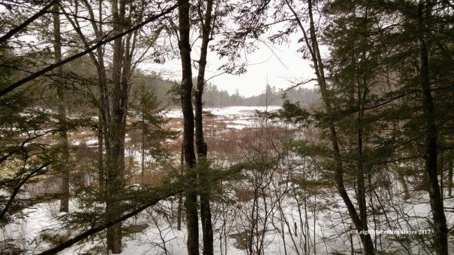 w15-Moose Pond Bog