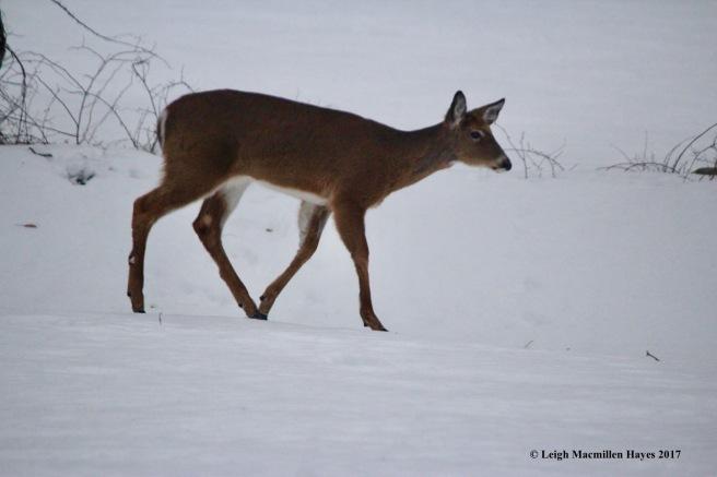 w3a--deer 3a
