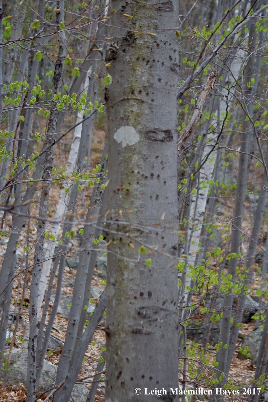 b-bear tree 3