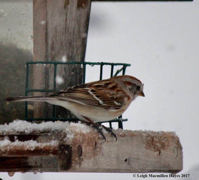 b-tree sparrow1
