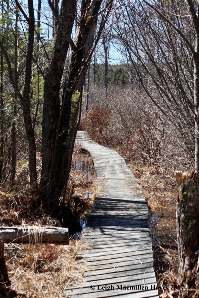 h-board walk-first section