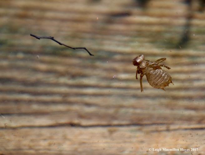 h-dragonfly exoskeleton 2