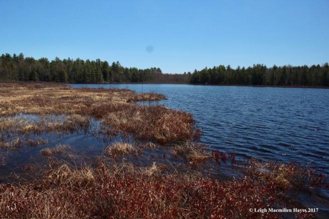 h-Holt Pond south