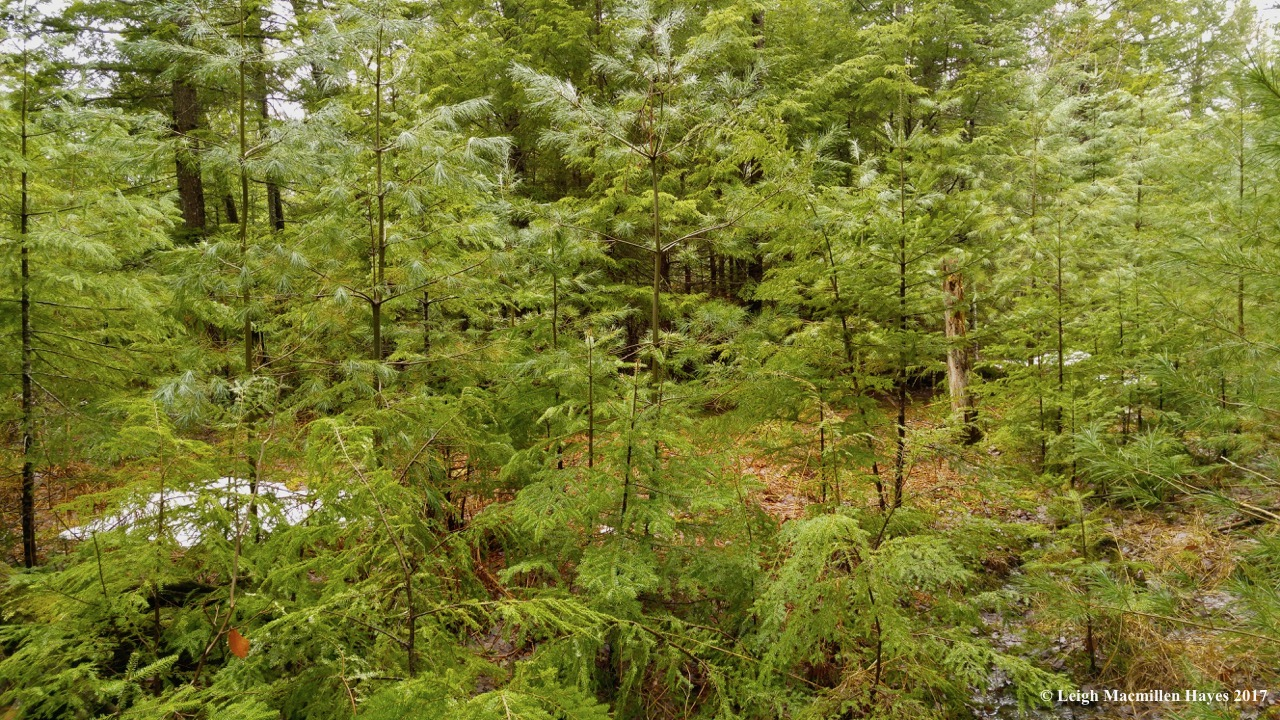 h1-woods north (1)