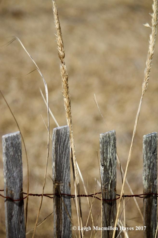 p-grasses
