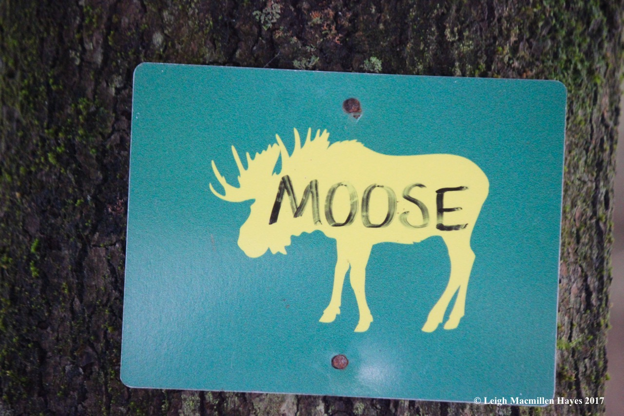 p-moose trail