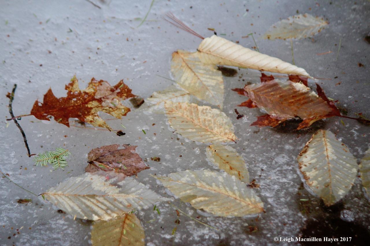 v-leaf offerings