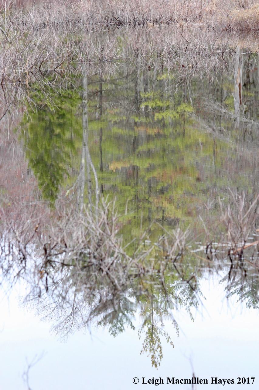 w-reflection