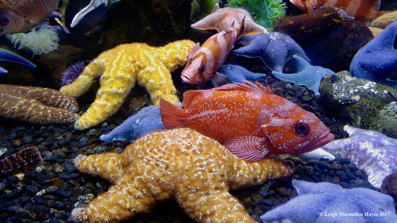 c-starfish and tropical fish