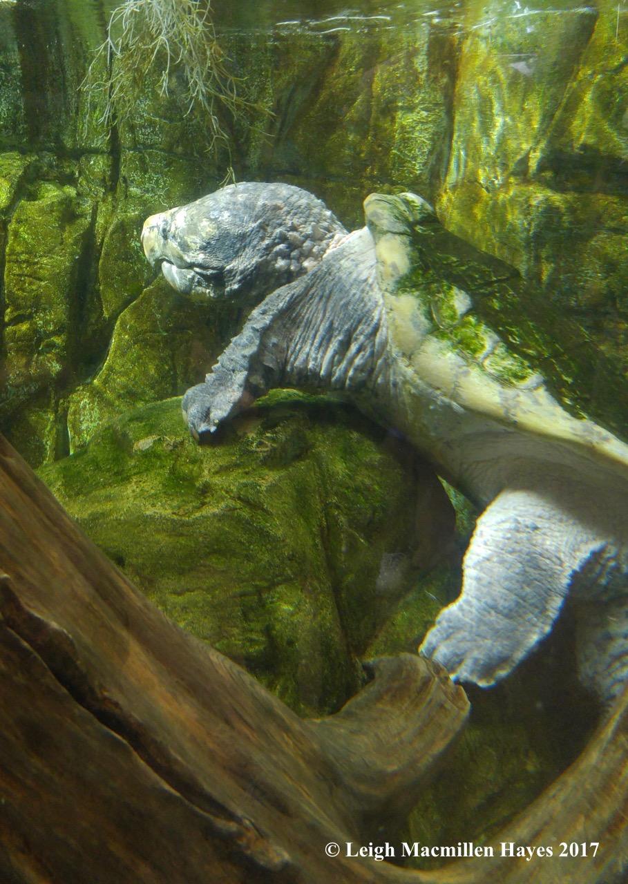 c-turtle 3 (1)