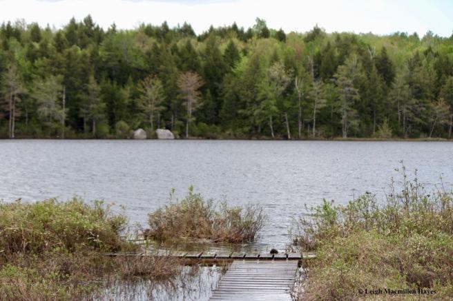 H-Holt Pond