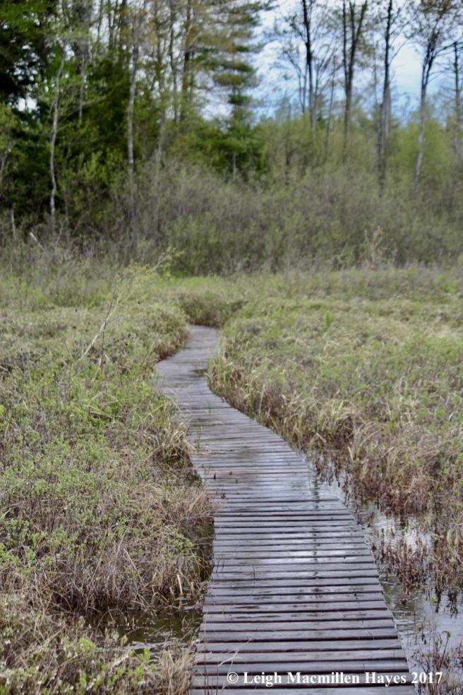 h-quaking bog 2