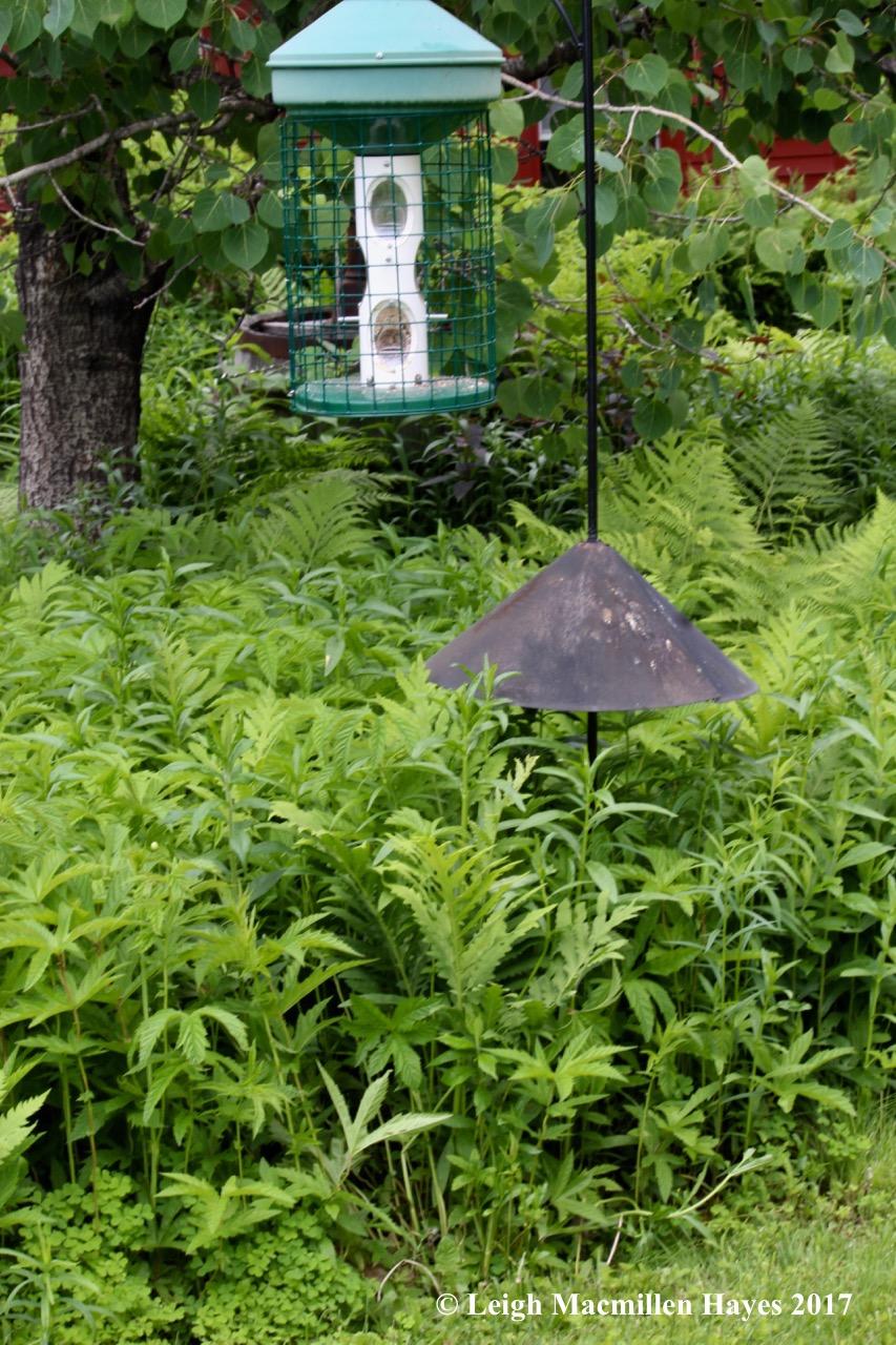 b-bird feeder