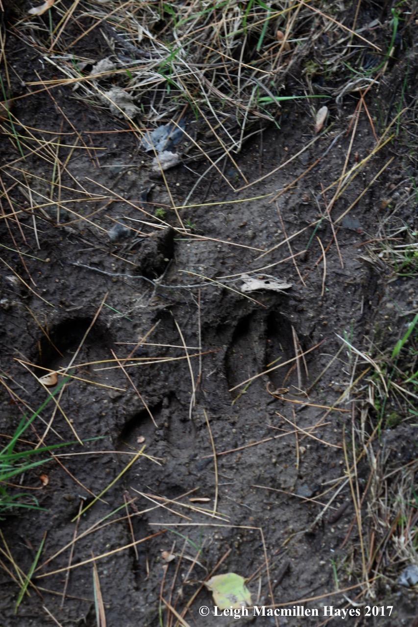b-deer prints