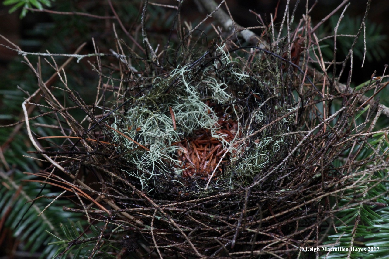 c-bird nest