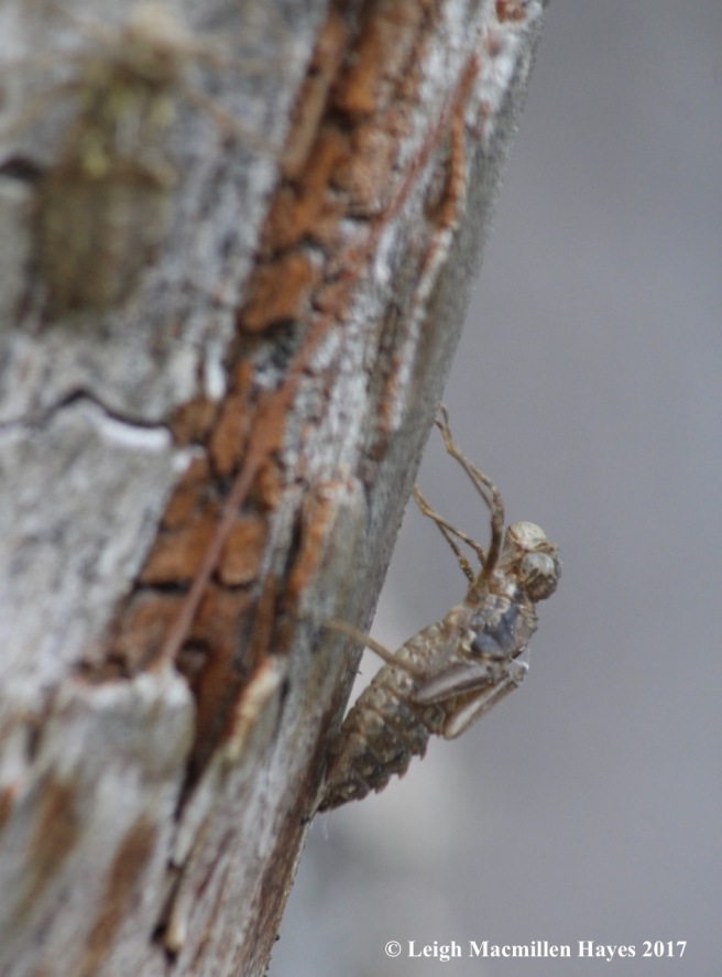 h-exoskeleton on tree