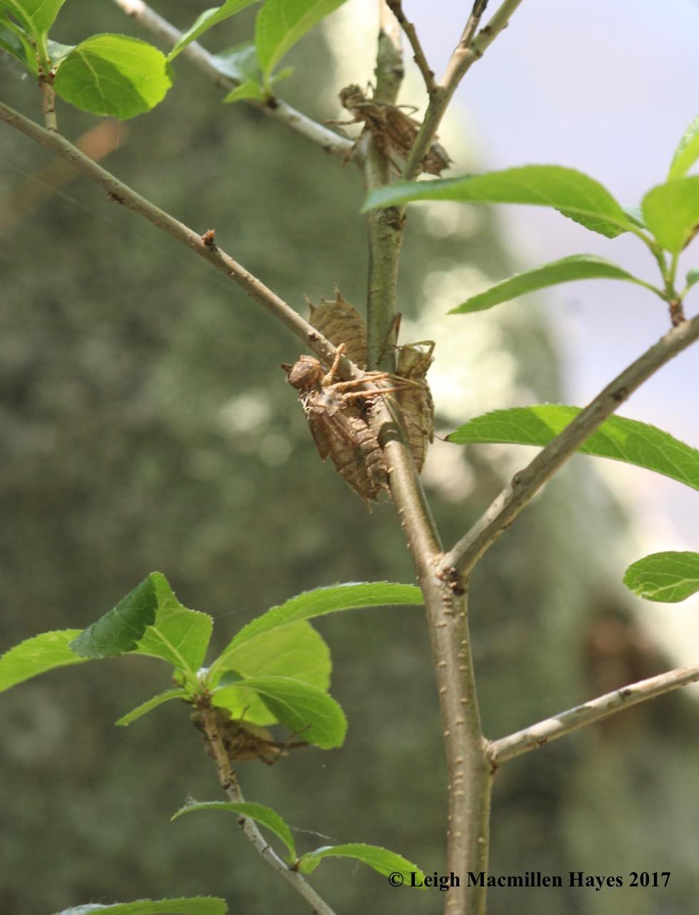 h-exoskeltons on shrub