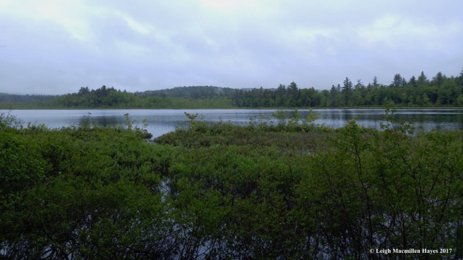 h-Holt Pond toward Quaking Bog
