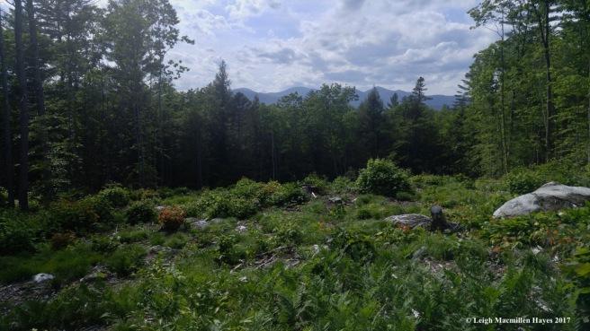 l-field view