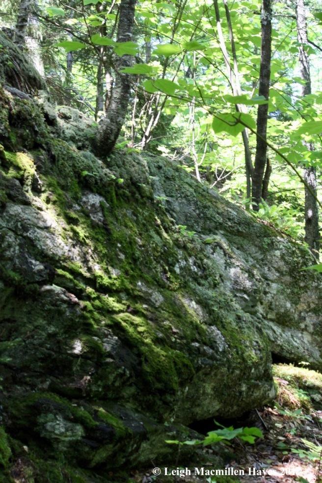 n-ledge on trail