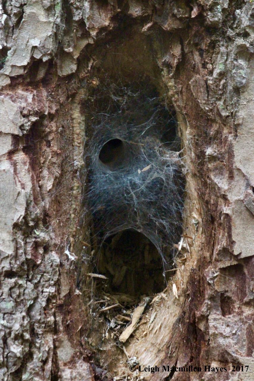 p-bog monster web