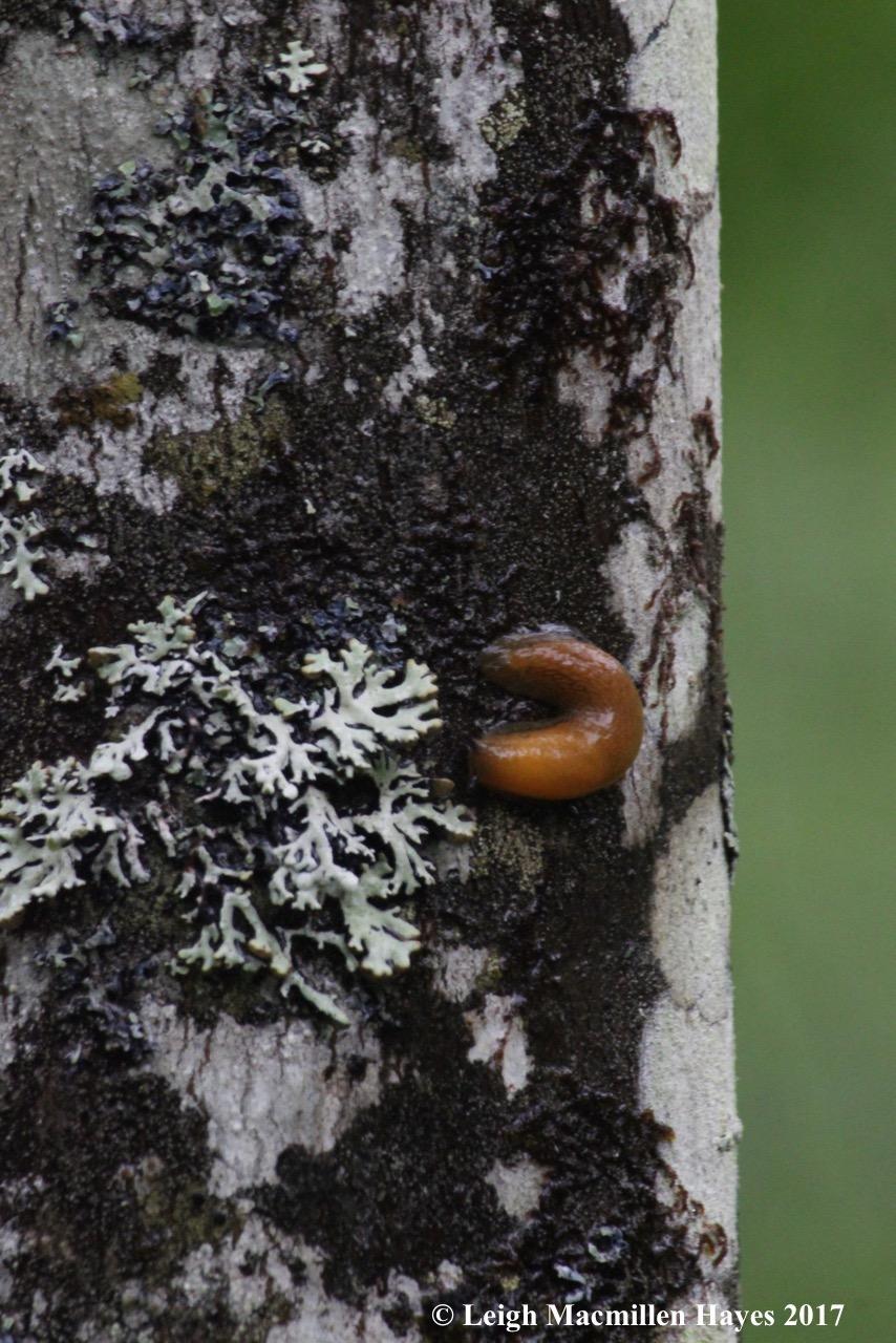 p-slug