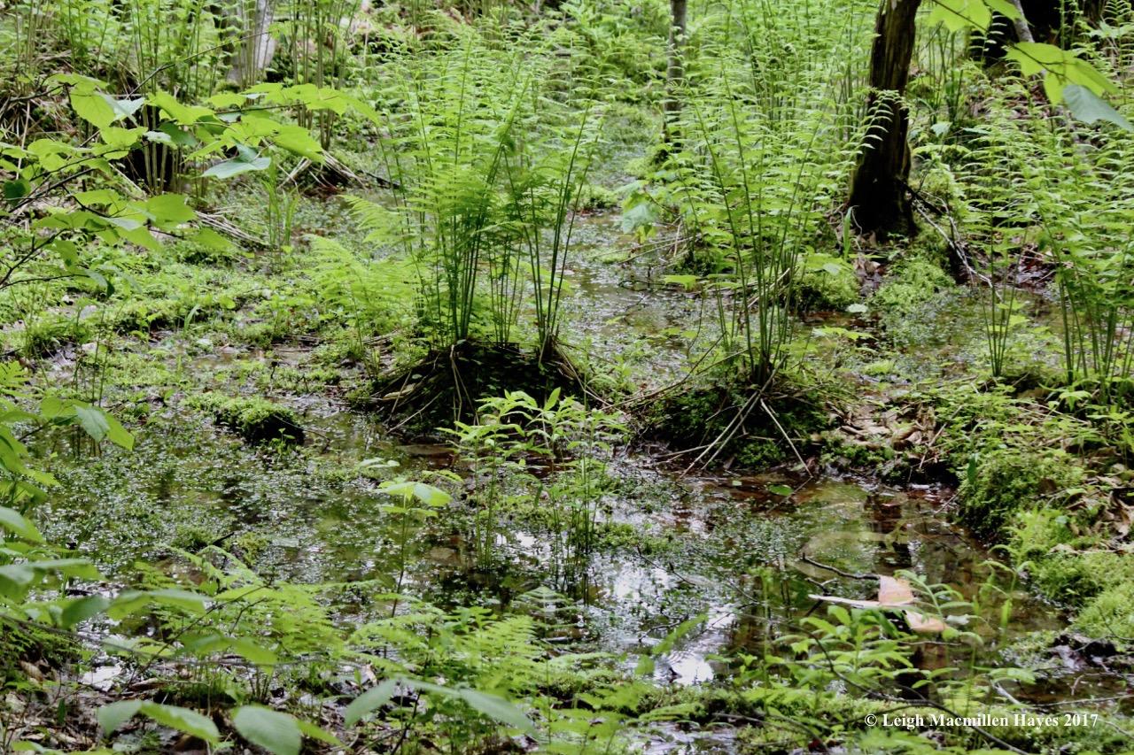 r-land of the cinnamon fern