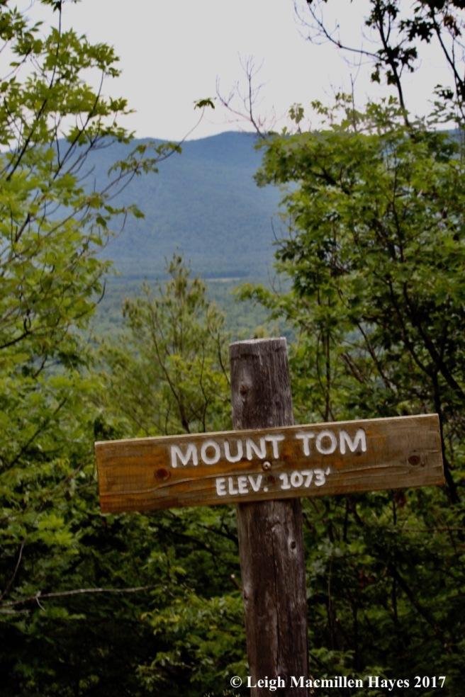 t-summit 1