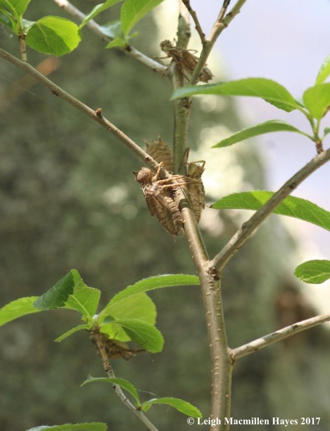d-exoskeleton shrubs