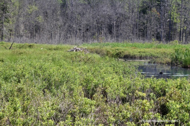 h-beaver lodge