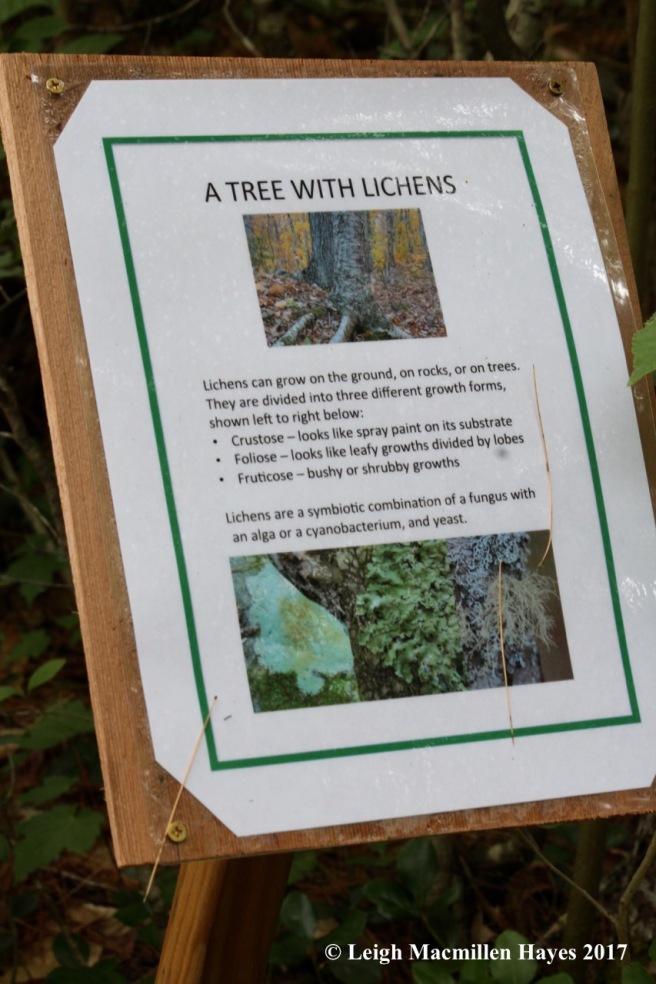 p-lichen sign