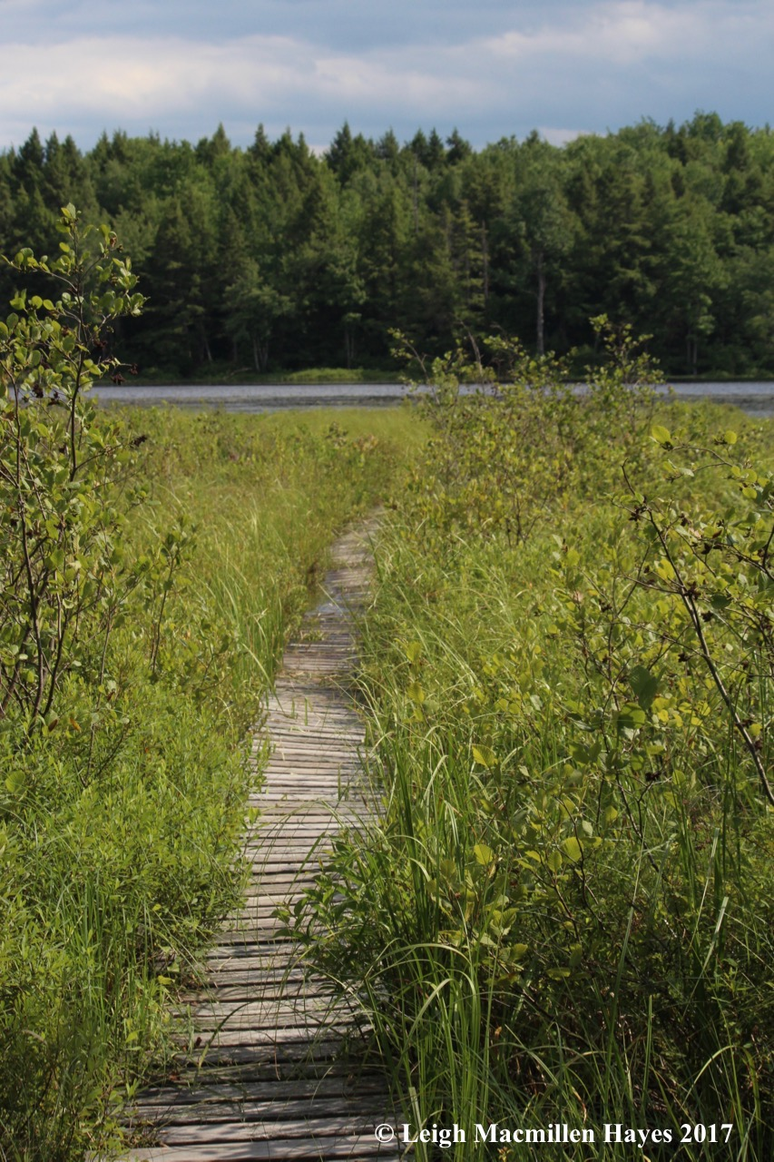 p-quaking bog boardwalk