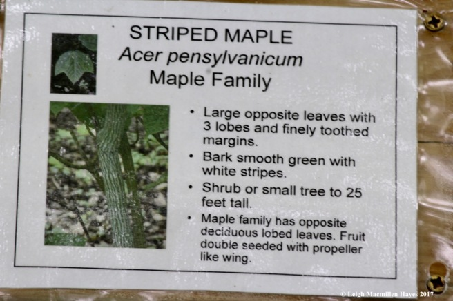 p-striped maple sign