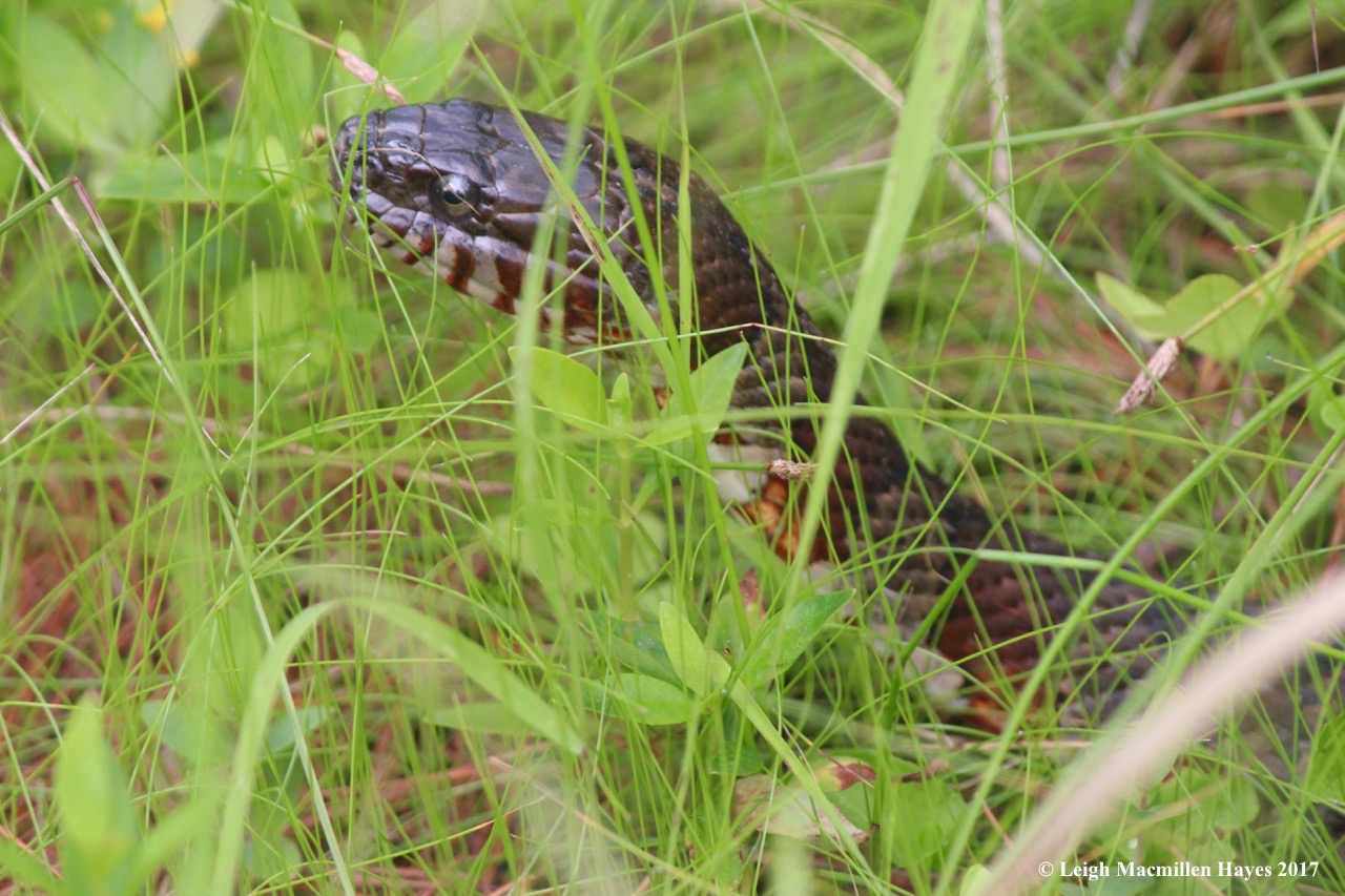 w-snake 3