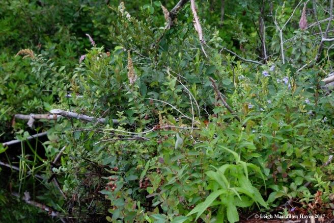 c-beaver lodge garden