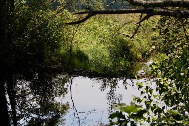 h-beaver dam:infinity pool