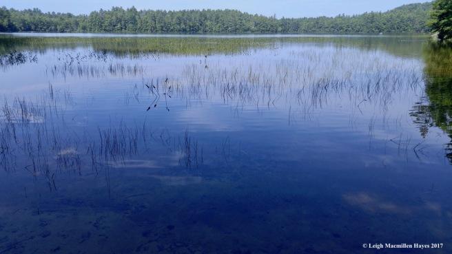 h-perley pond