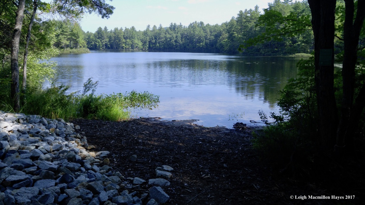 h-pickerel pond