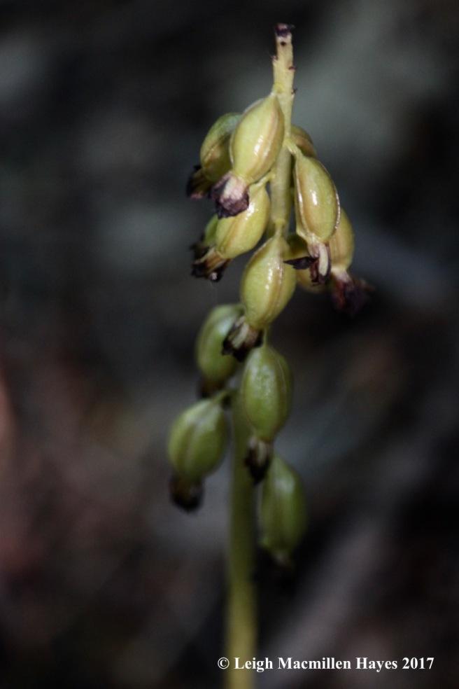 l4-orchid