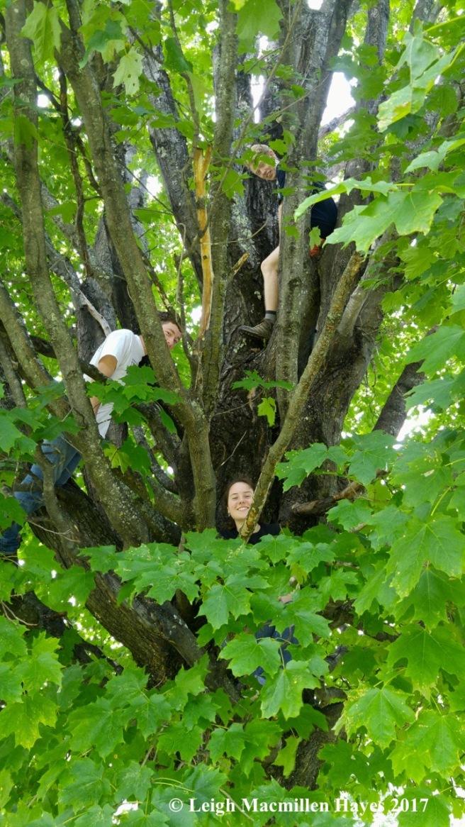 Tree 3 (1)