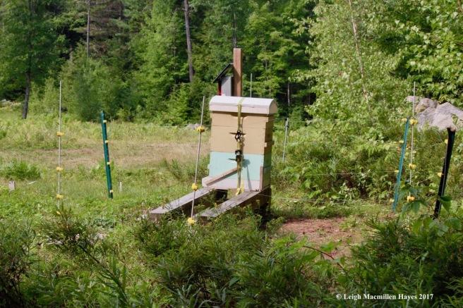 w-hive--bear precautions