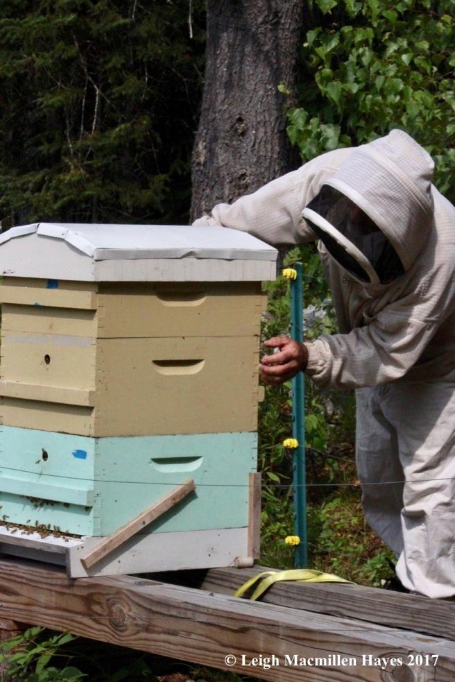 w-preparing to open the hive
