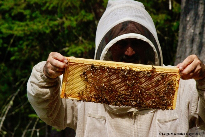 w-showing off his bees