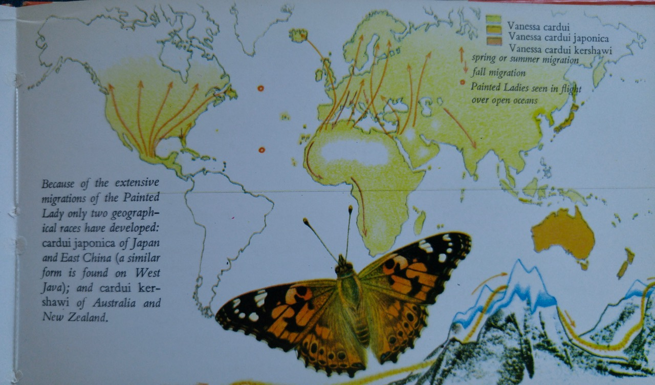 b-painted lady map