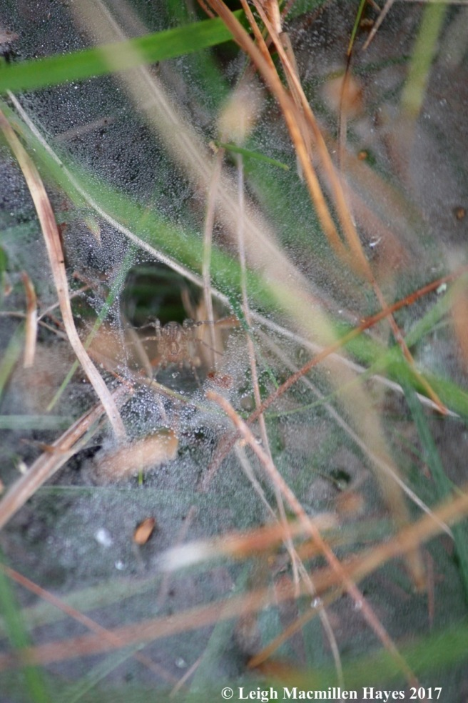 l2-funnel spider 1