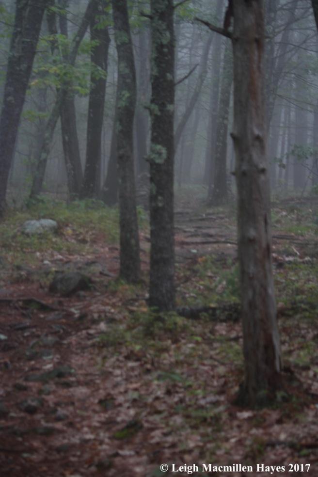 l2-into the fog
