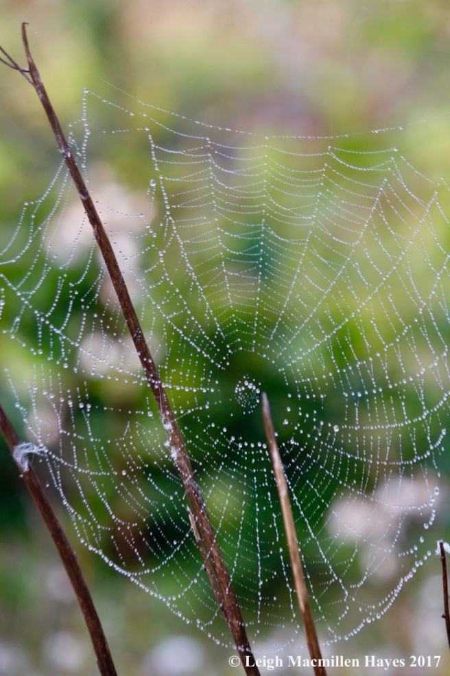 l4-orb web 1