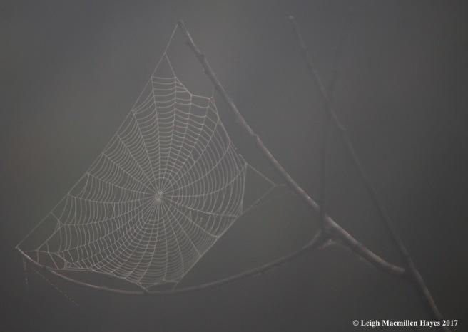 l4-web 2