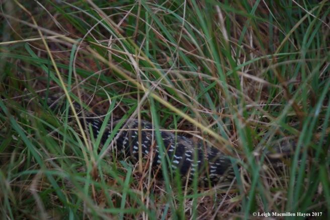 m30-bigger snake 4