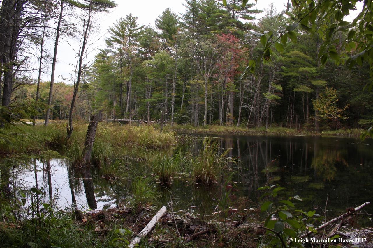m8-beaver pond